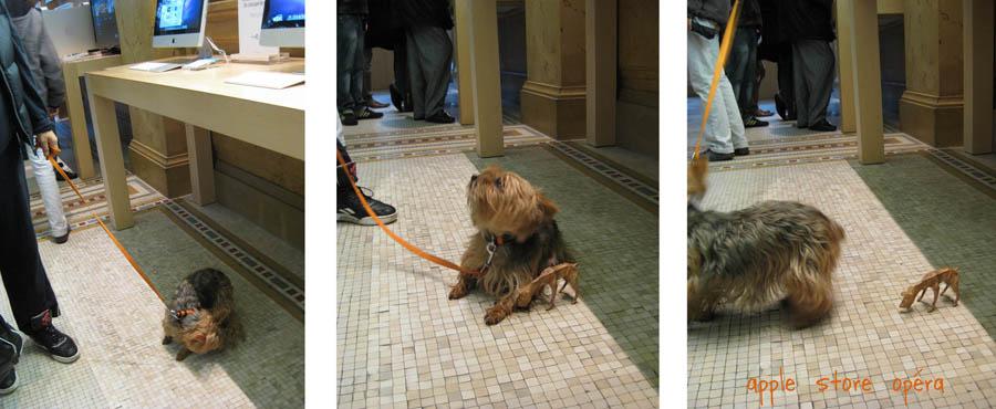 paperpets paris apple real pup
