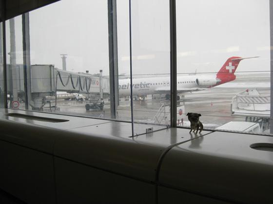 paperpets xmas travel-window