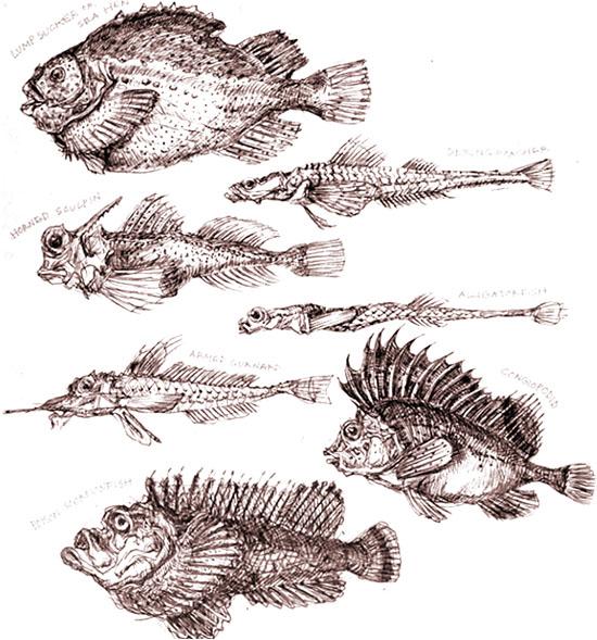 BLoG fierce fish