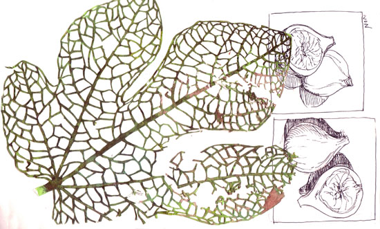 BLoG fig leaf vein cutouts