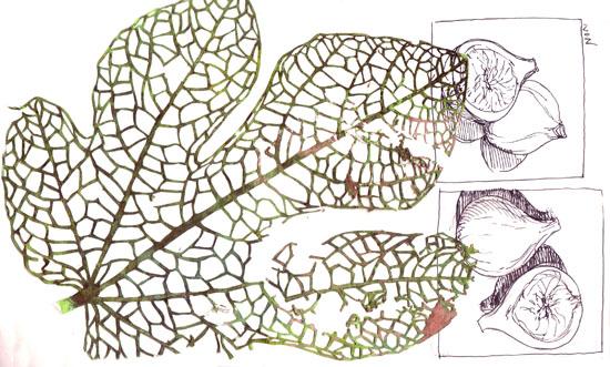 BLoG fig leaf vein cutouts