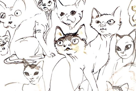 cats human2