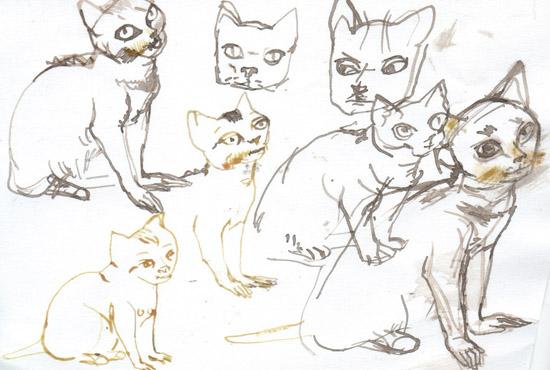 cats human3