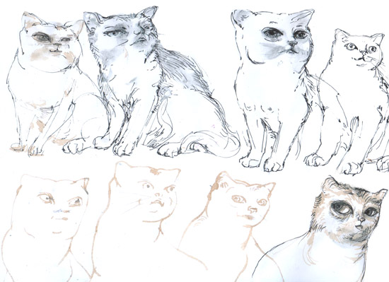cats human4