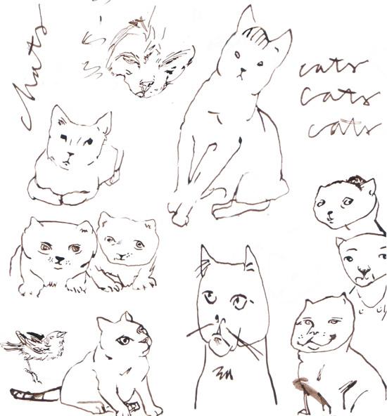 cats humans5