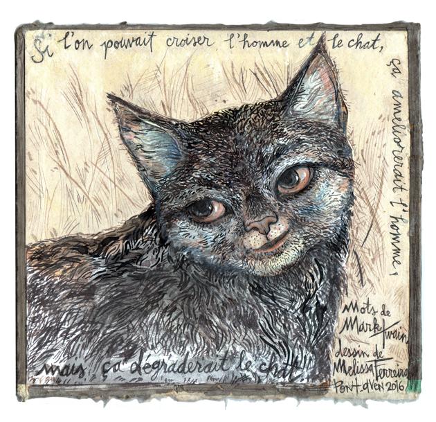 chat-pour-gloria
